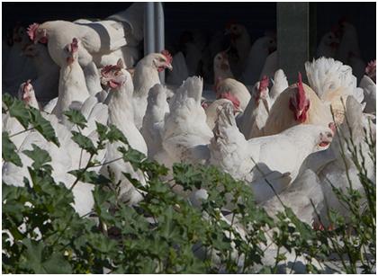 Congratulations! Sensitar has a big deal with JTC Poultry Processing Hub